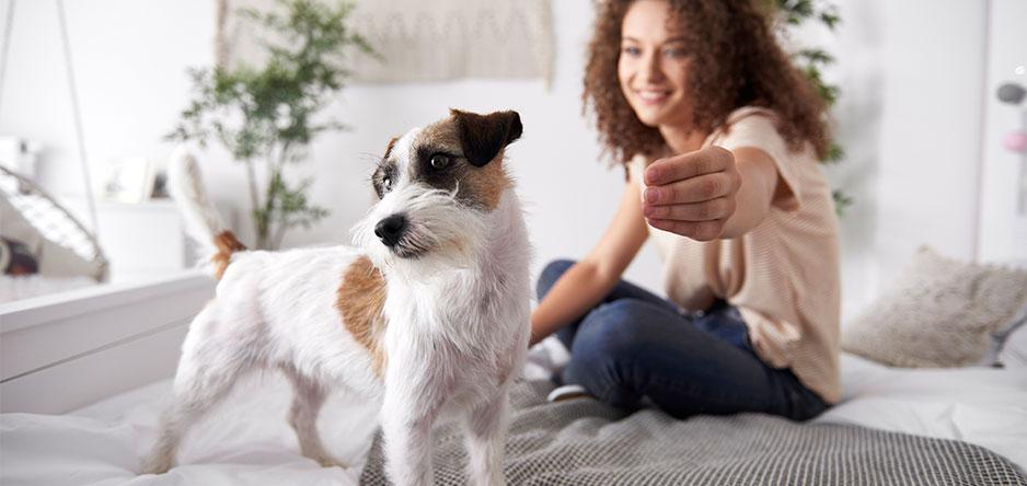 Hundekrankenversicherungen